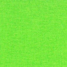 0262 609 gecko Canoso